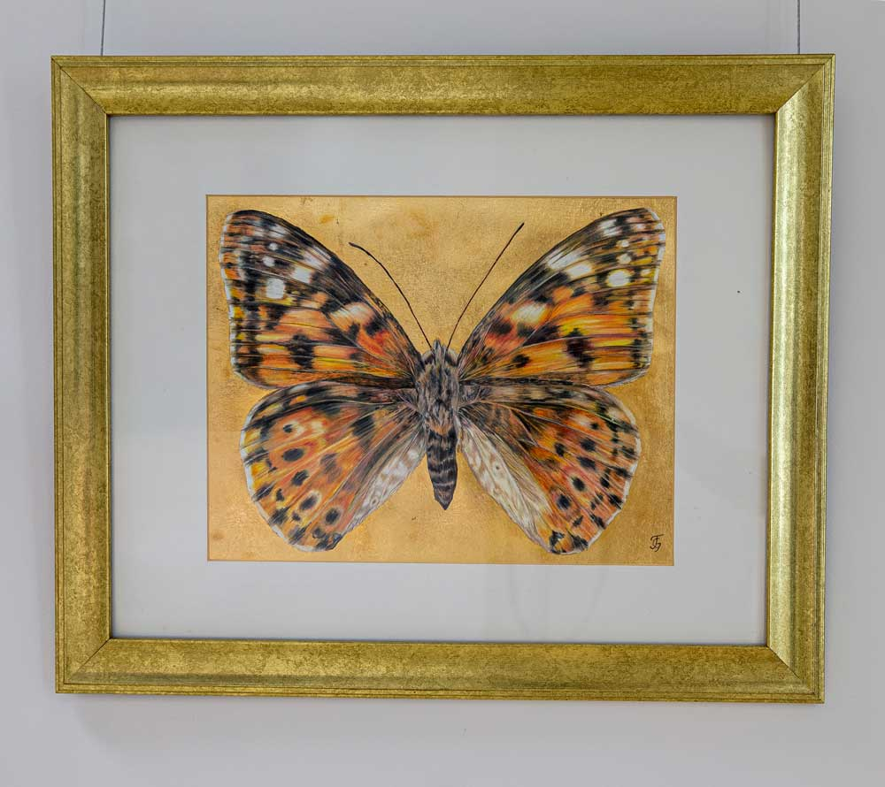 Painted Lady (Top) Butterfly drawing by Grazyna Tonkiel