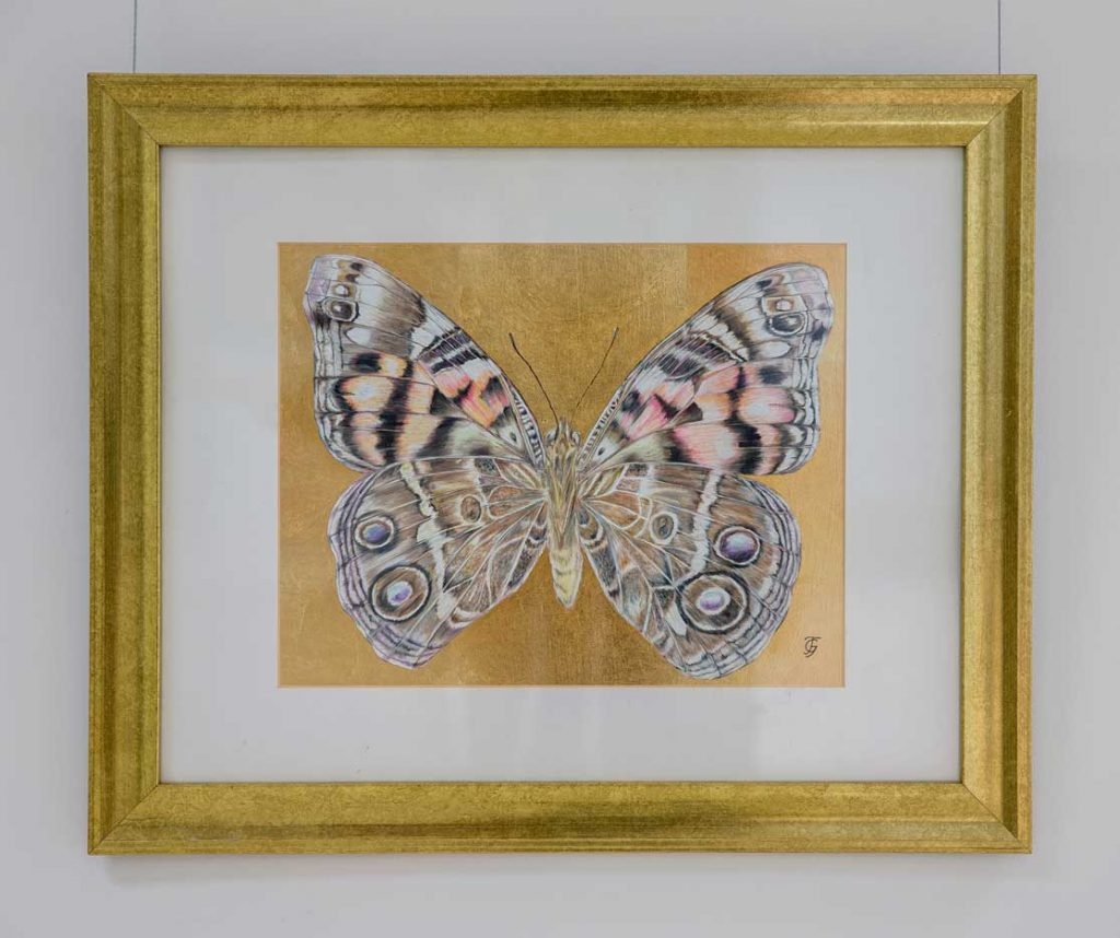 Painted Lady (Under) butterfly drawing by Grazyna Tonkiel