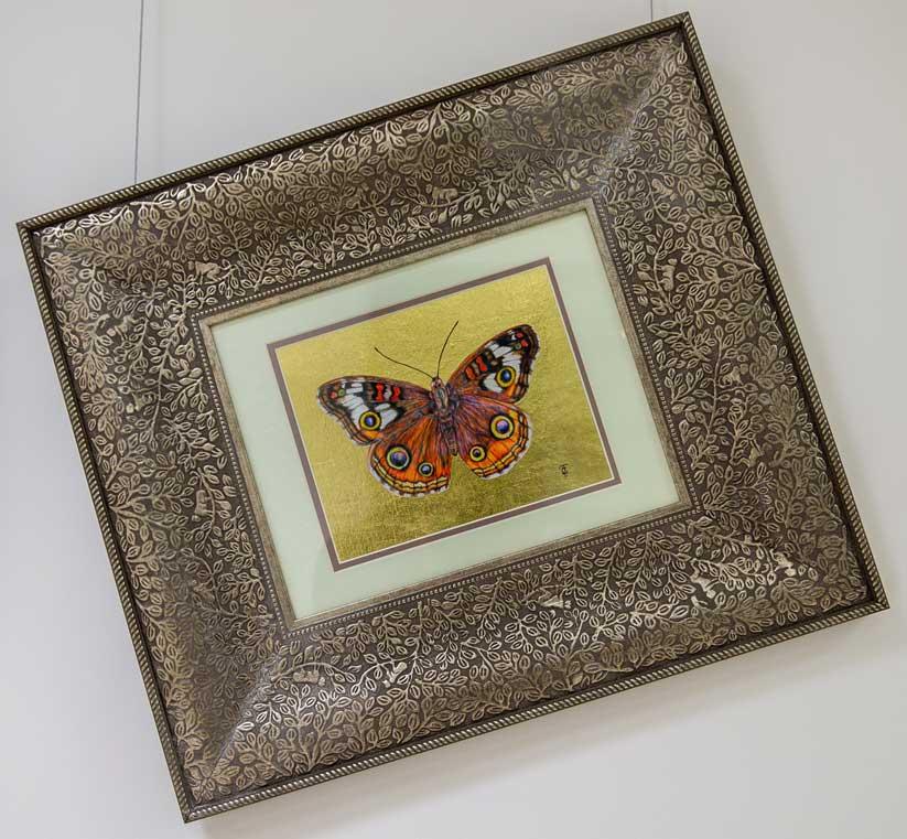 Buckeye Butterfly drawing by Grazyna Tonkiel